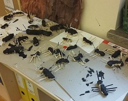 Cykl życiowy mrówki