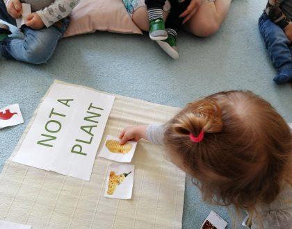 Poznajemy rośliny